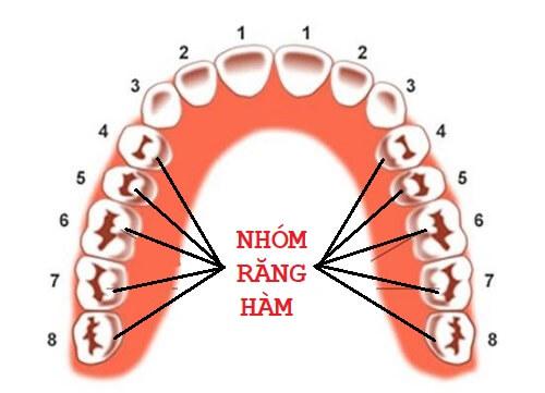 Nhổ răng hàm trong trường hợp nào? Nhổ răng hàm có nguy hiểm không? 1