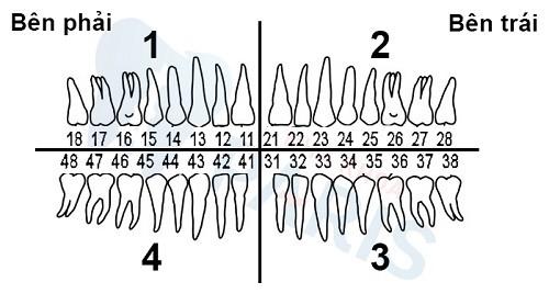 vị trí răng số 6