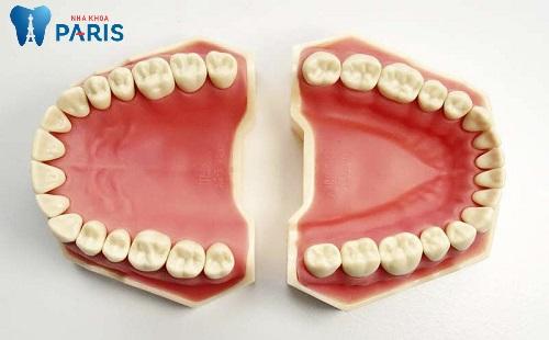 Tổng số răng người có bao nhiêu cái