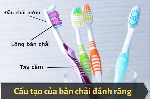 Cấu tạo của bàn chải đánh răng